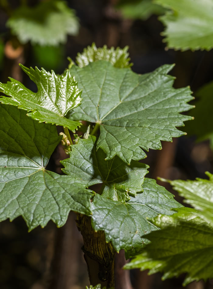 Sunridge Nurseries